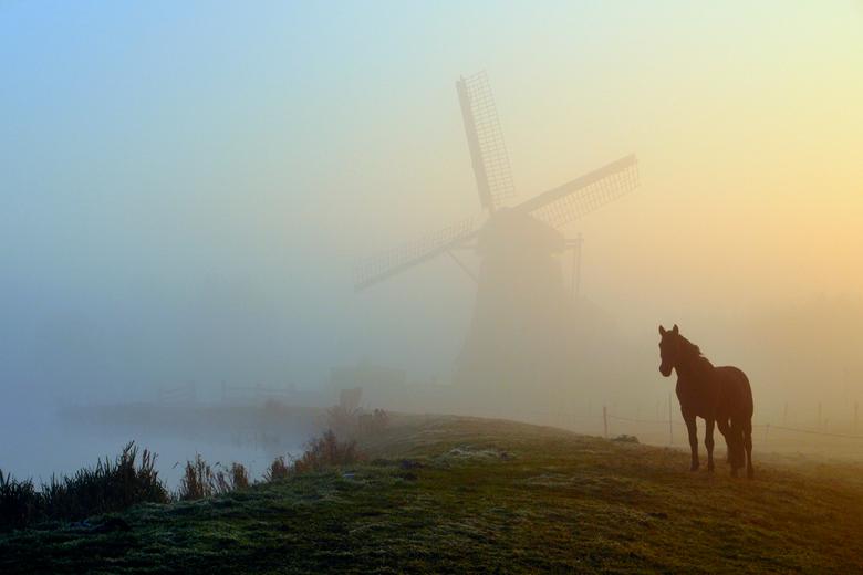 Paard in de ochtenmist