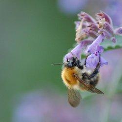 nectar pikken ;)
