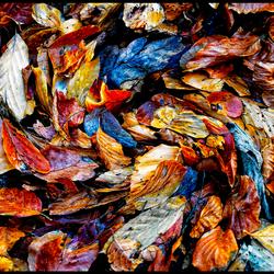 Herfst wervelwind