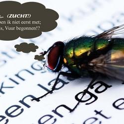 Eerste (Vlieg)leesles
