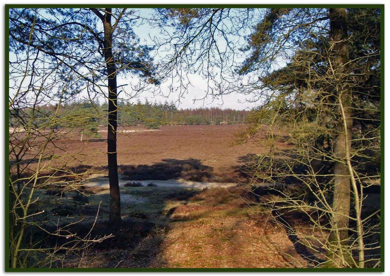 Heideveld nog in wintertooi. - De foto is genomen in het Drents-Friese Wold. Op de grens van Zuidwest Drenthe en Zuidoost Friesland, ligt een bijzonde