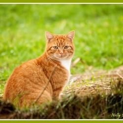 Roofdier versus huiskat