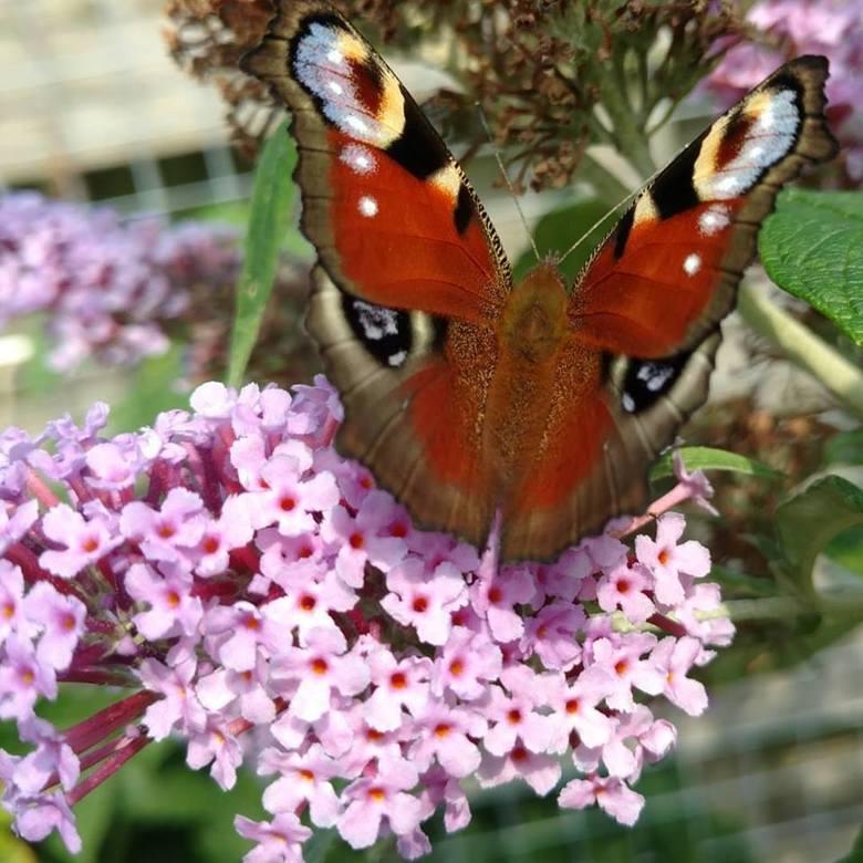Vlinder op een bloem -