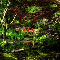 Japanse Tuin.jpg