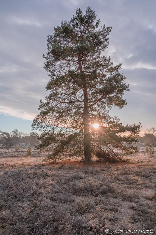 Frosty sunrise  - Een koude zonsopkomst met grondvorst op de Brunssummerheide.<br /> <br /> Bedankt voor jullie fijne reacties.<br /> Groet, John.