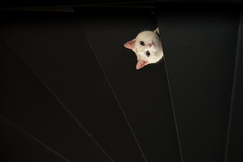 Scary cat
