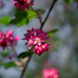 Bloesem volop in de vroege lente