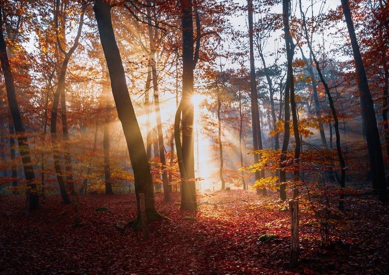 Autumn explosion -