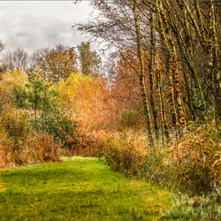 Herfst- Earnewald