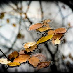 drijvende herfstblaadjes