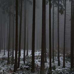 Hunsruck mist in bos
