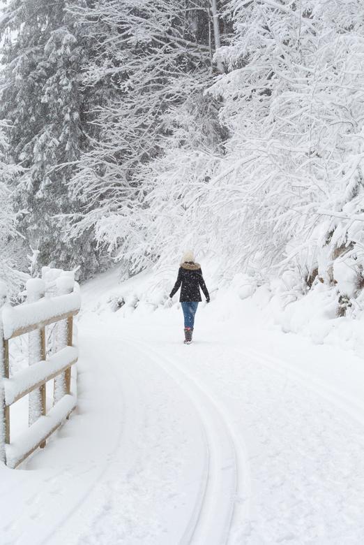 walk in a white world