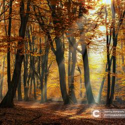 Dromen in de wouden