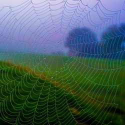 Spinny Spider Web