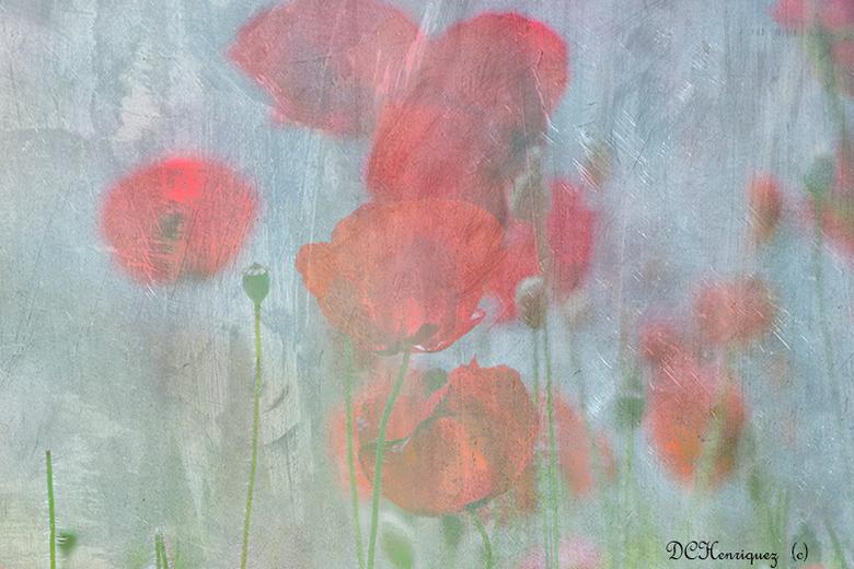 Klaprozen - Een impressionistische bewerking van de klaprozen. <br /> <br /> Bedankt voor de fijne reacties bij mijn vorige opname. Fijne Koningsdag