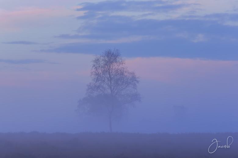 Blue Mist - In herinnering aan de mooie paars bloeiende heide, ontstond in de ochtend een paar weken na het einde van het heide bloei seizoen deze moo