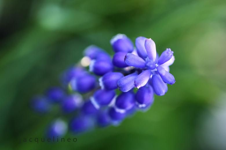 Blauw - Macro