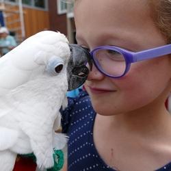 Dit leuke meisje was op slag verliefd op Maxi. Braderie Wekerom, 24-8-2017.