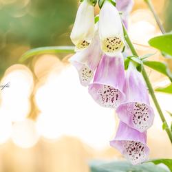 Bloemen goud licht