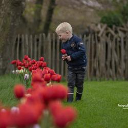 Die tulpen zijn zo mooi! Daar kan ik niet afblijven...