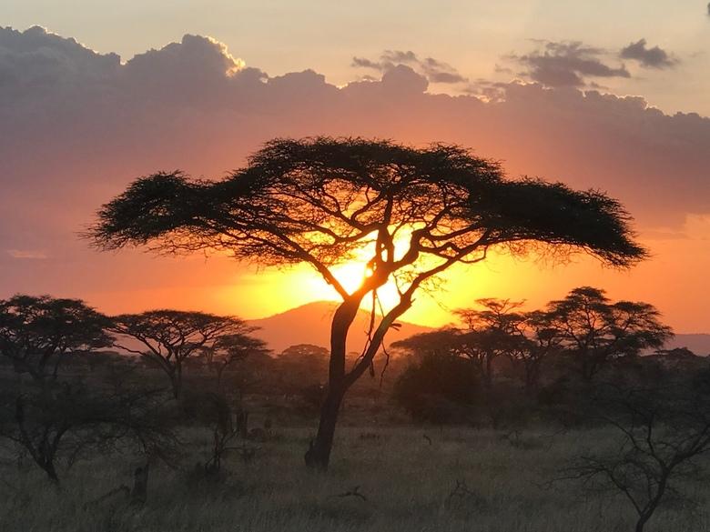 Tanzania18 - Acacia boom in Sergenti national park tijdens zonsondergang, Tanzania, Afrika