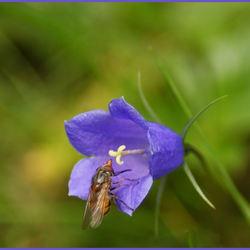 Beestje op bloem