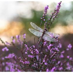 Mooie paarse ochtend