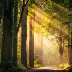 Sunray path