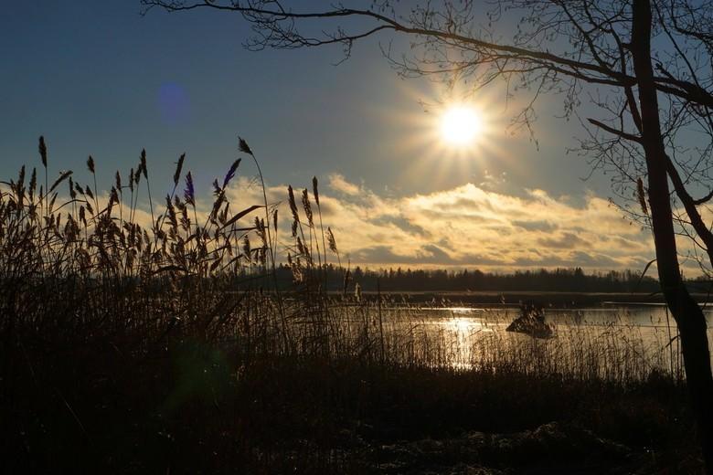 natuur - Pal tegen de zon in gefotografeerd .<br /> bedankt voor jullie reacties bij mijn laatste foto.<br /> gr marian