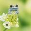 Rubyeye tree frog