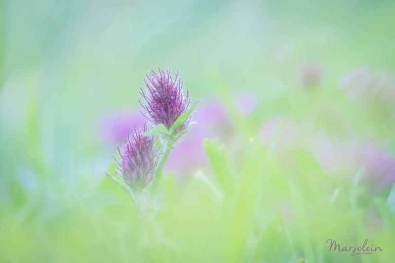 soft - Foto gemaakt met mijn lensbaby edge 50mm