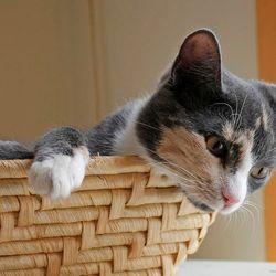 Nieuwsgierig katje