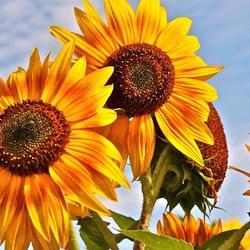 Warme, zonnige zomerdag
