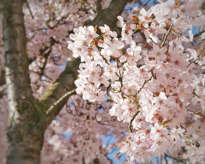 Lente gevoel  - Voorjaar