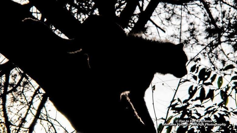 """Ik wil er uit... - Tja en als een cheetah de boom niet uit durft kun je dan ook de brandweer bellen? <img  src=""""/images/smileys/wilt.png""""/>"""