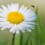 Bloemen en beestjes