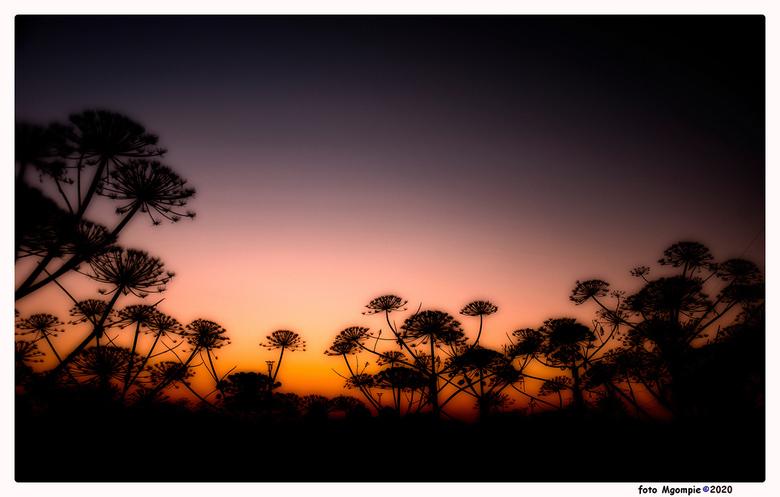 Dutch jungle - Soms lijkt Nederland gewoon &quot;on-Nederlands&quot;. Berenklauwen in de vroege ochtend.<br /> <br /> Bedankt voor de reacties op <a