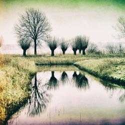 Spiegelboom