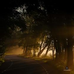 Lisserlicht