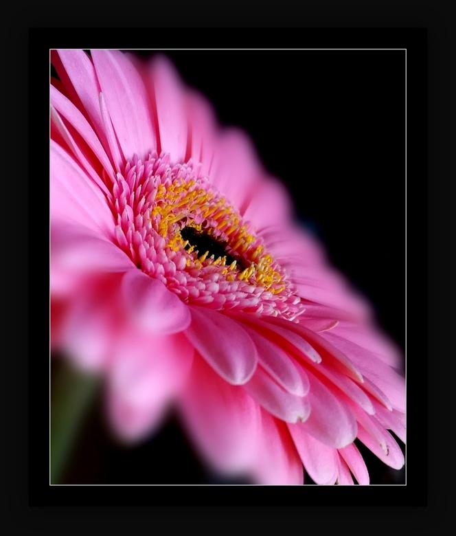 Pink Ribbon - ... ook mogen we hier wel even aandacht aan geven en aan vele andere nare ziektes... en gezondheid.