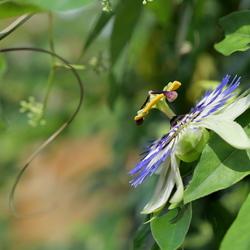 Passie voor een prachtige bloem