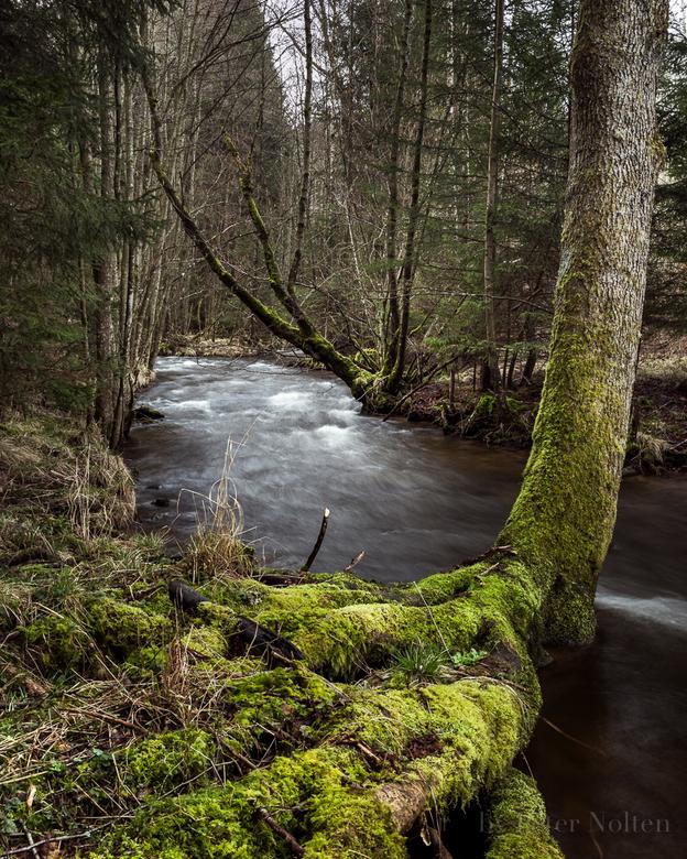 Boswandeling door de Ardennen