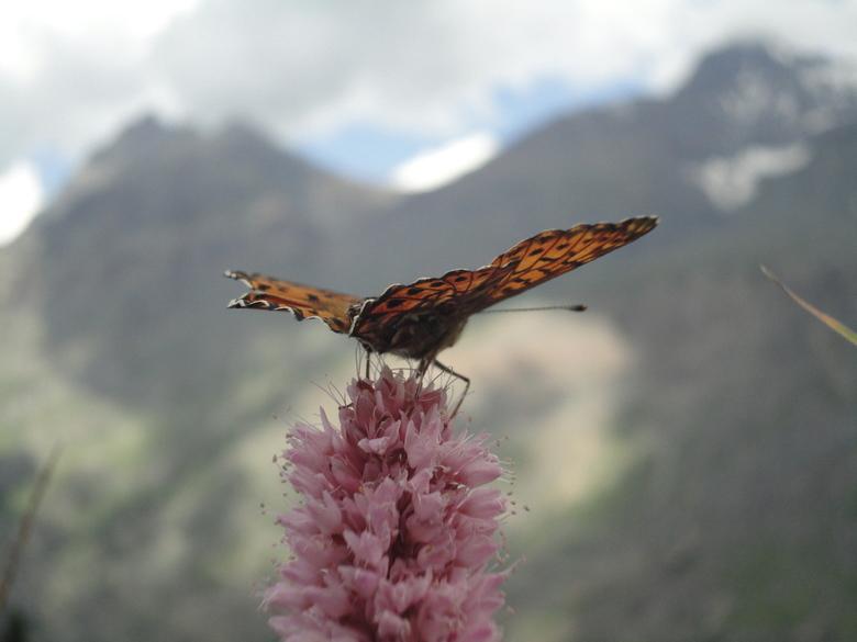 Vlinder op bloem -