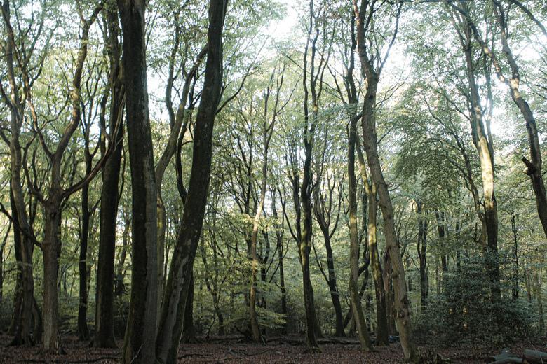 Speulderbos - Gemaakt in het Speulderbos.