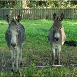 Een beetje nieuwsgierig deze ezels.