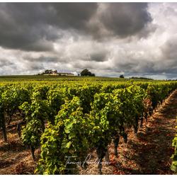 Wijngaard Bordeaux