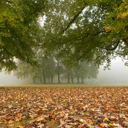 Op een mistige ochtend ergens in november