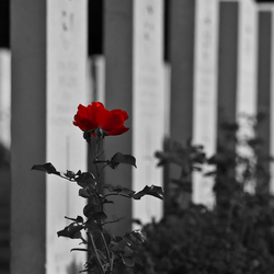 Militaire begraafplaats Oosterbeek