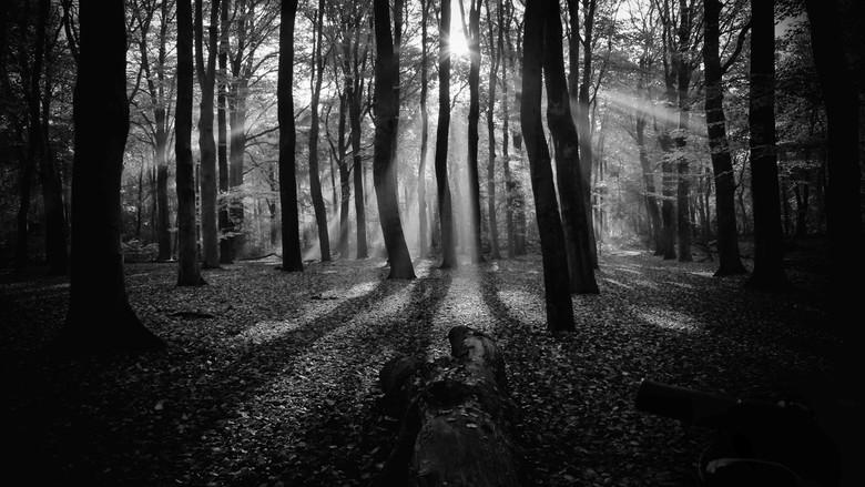 mystic bos - de originele foto is wat kleuriger/vrolijker.<br /> vond het wel leuk om het geheel om te zetten in zwart wit.<br /> <br /> gr Joke