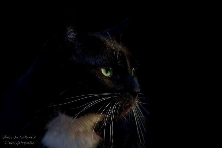 Black cat -